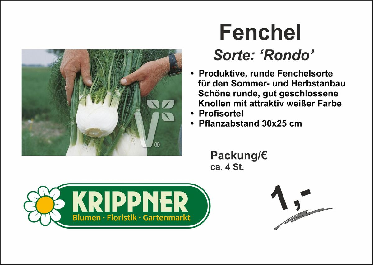 Fenchel Knolle